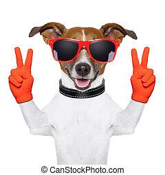 doigts, paix, chien, victoire