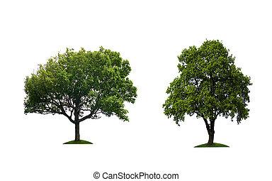 dois, árvores verdes, isolado, ligado, um, branca