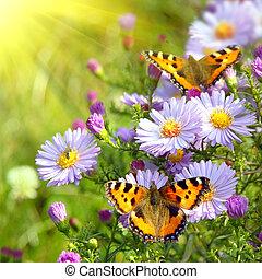 dois, borboleta, ligado, flores