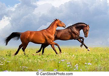 dois, cavalos, corrida
