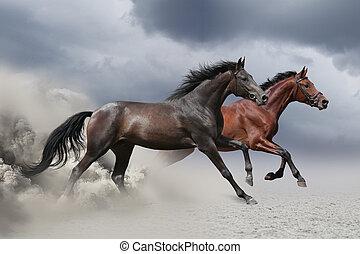 dois, cavalos, executando, em, um, galope