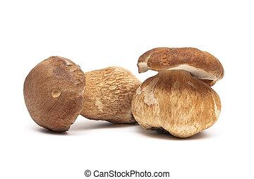 dois, cogumelos, closeup, fundo, fresco, branca
