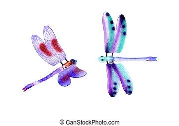 dois, coloridos, libélula, voando, insetos, isolado