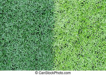 dois, cores, capim, ligado, campo futebol, como, fundo
