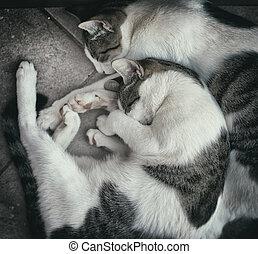 dois, desabrigado, gatos, descansar, a, rua.