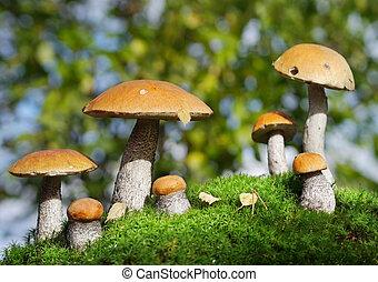 dois, famílias, de, cogumelos, reunião, em, a, floresta,...