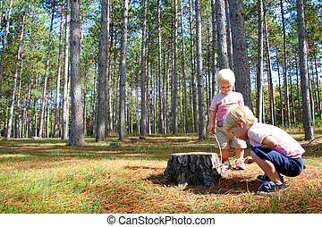 dois, filhos jovens, explorar, em, árvore pinho, floresta