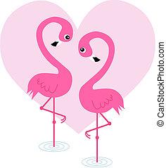 dois, flamingo, pássaros, apaixonadas