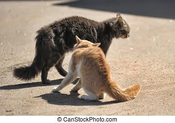 dois, gatos, é, luta, rua