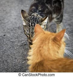 dois, gatos, encontrado, rua