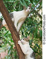 dois, gatos, escalando, ligado, a, árvore.