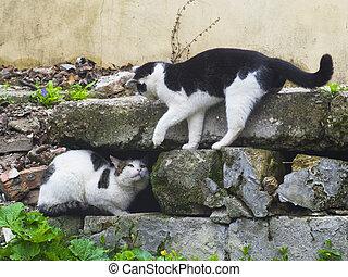 dois, gatos, luta, ligado, rua