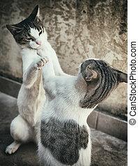 dois, gatos, luta, ou, tocando, ligado, a, rua.