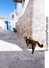 dois, gatos, rua