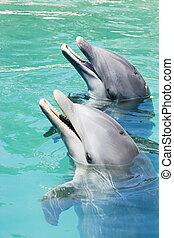 dois, golfinhos, tocando