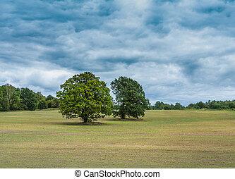 dois, grande, árvores, ligado, vazio, campo, em, floresta