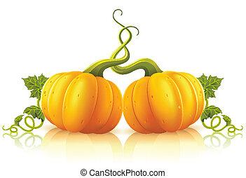 dois, laranja, abóboras, com, verde sai