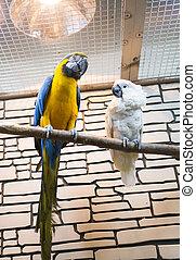 dois, papagaios, sentar, uma filial, em, a, jardim zoológico