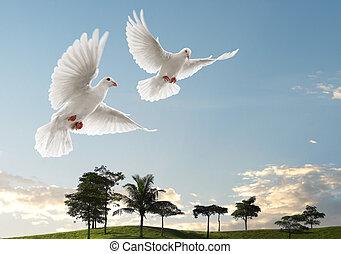 dois, pombas, voando