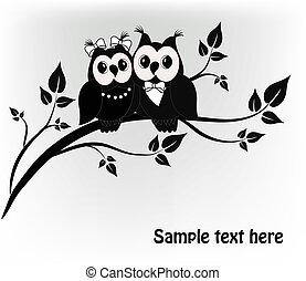 dois, preto branco, ligado, um, pretas, corujas