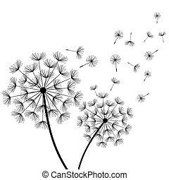 dois, stylized, dandelions, experiência preta, branca