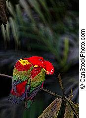 dois, vermelho, papagaios, sentar, uma filial