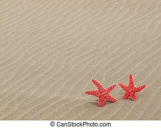 dois, vermelho, starfish, praia, com, windswept, areia,...