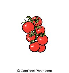 dojrzałe pomidory, winorośl, ilustracja, wektor, grono
