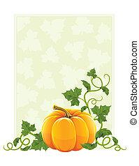 dojrzały, liście, pomarańcza, zielona roślina, dynia