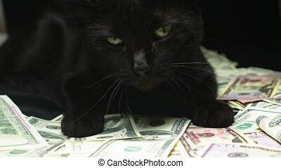 Dollar and a cat. lies on banknotes