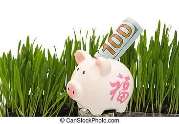 dollar bills in the green grass