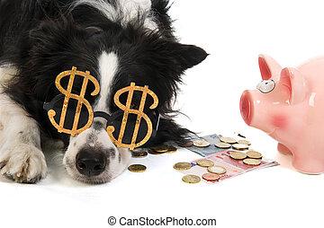 dollar, dog, met, piggy bank