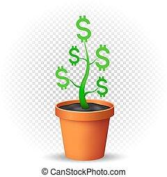 dollar, pflanze, grows, in, blumentopf