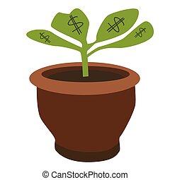 dollar, pflanze
