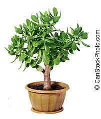 Dollar plant or money tree cutout