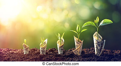 Dollar Seedling - Growth Concept - Plants On Banknotes In Increase