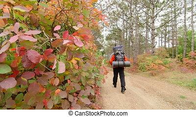 DOLLY: Backpacker walking - Backpacker walking on a path...