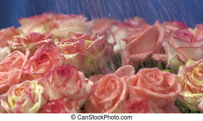 Dolly: Big rose bouquet in the rain