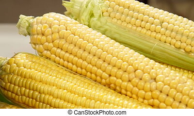 DOLLY: Corn Cob Boiling in a Pot - Fresh Corn Cob Boiling in...