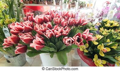 DOLLY: Flower Shop Interior