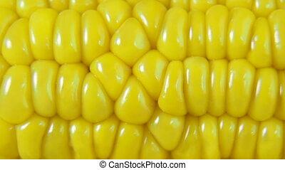 DOLLY: Fresh Corn