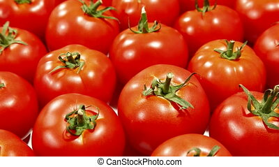 DOLLY: Fresh Tomatoes