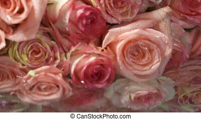 Dolly: Pink cream yellow roses flowers with water drops