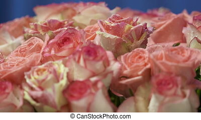 Dolly: Pink cream yellow roses flowers with water drops...