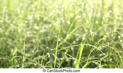 drop water on grass