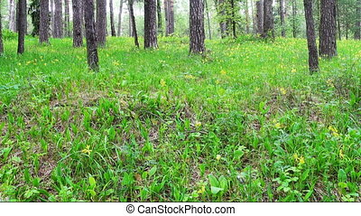 Dolly shot of beautiful spring forest and flowers.