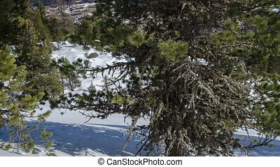 Dolly Shot over Pine Trees in Snowy Forest with Snow Pillows in Winter Alps Mountains Time Lapse