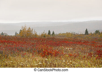 Beautiful Plateau of Dolly Sods in West Virginia
