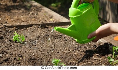 Dolly footage of woman gardener watering small green plant sprouts growing in soil on garden bed. Concept of healthy nutrition, bringing new life and protecting nature. Planting organic vegetables