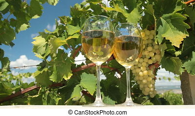 DOLLY: White Grape and Wine